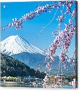 Mt Fuji And Cherry Blossom At Lake Acrylic Print