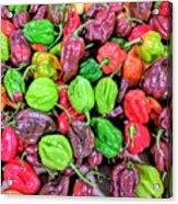 Multi Mini Hot Pepper Variety Acrylic Print