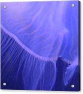 Mystical Jellyfish Acrylic Print