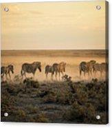 Namibia, Etosha National Park, Herd Acrylic Print