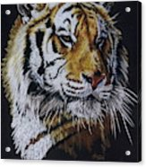 Nanook the Tiger Acrylic Print
