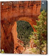 Natural Bridge - Bryce Canyon - Utah - Vertical Acrylic Print
