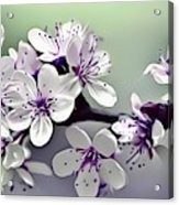 Naturalness And Flowers 33 Acrylic Print
