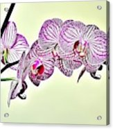 Naturalness And Flowers 37 Acrylic Print