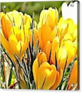 Naturalness And Flowers 56 Acrylic Print