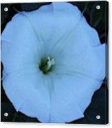 New Mexico Flower Acrylic Print