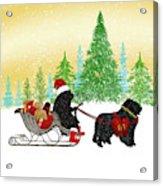 Newfoundland Dog Christmas Acrylic Print