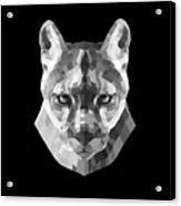 Night Mountain Lion Acrylic Print