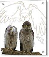 O Is For Owl Acrylic Print