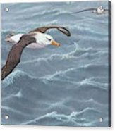 Ocean Flight Seabirds By Alan M Hunt Acrylic Print