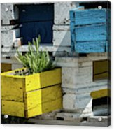 Old Pallet Painted White, Blue And Yellow Used As Flower Pot Acrylic Print
