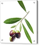Olives On Branch Acrylic Print
