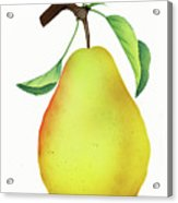 One Yellow Juicy Pear Acrylic Print