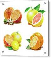 Orange Grapefruit Lemon Watercolor Fruit Illustration Acrylic Print