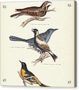 Order Passeriformes Acrylic Print