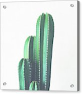 Organ Pipe Cactus Acrylic Print