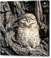 Owl In A Tree Acrylic Print