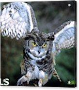 Owls Mascot 2 Acrylic Print