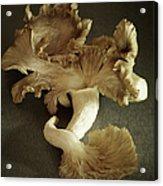 Oyster Mushrooms Still Life Acrylic Print