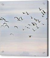 Pacific Ocean Sky With Sea Gull Acrylic Print