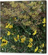 Painted Fall Flowers Acrylic Print