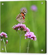 Painted Lady Butterfly In Green Field Acrylic Print