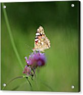 Painted Lady Butterfly In Shadows Acrylic Print