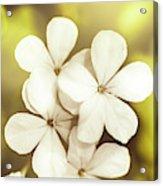 Pale Wildflowers Acrylic Print