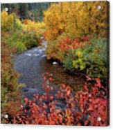 Palisades Creek Canyon Autumn Acrylic Print
