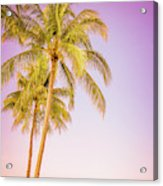Palm Trees And Pink Sky Acrylic Print