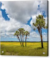 Palm Trees In The Field Of Coreopsis Acrylic Print