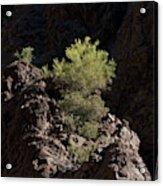 Palo Verde Spotlight-sq Acrylic Print