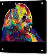 Panda Little Bear Australia Animal Color Designed Acrylic Print