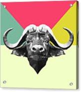 Party Buffalo Acrylic Print