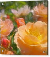 Peach Yellow Roses Acrylic Print