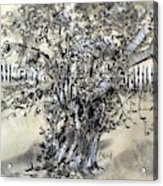 Pear Tree And Pickets Acrylic Print