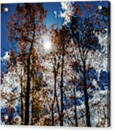 Peeking Through Acrylic Print