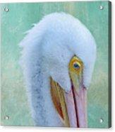 Pelican Beauty Acrylic Print