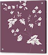 Phacelia Purple Flower Acrylic Print