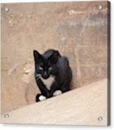 Pharaoh Cat Acrylic Print