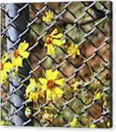 Phoenix Arizona Papago Park Blue Sky Red Rocks Scrub Vegetation Yellow Flowers 3182019 5327 Acrylic Print