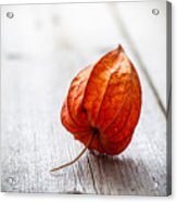 Physalis Alkekengi On Wood Acrylic Print