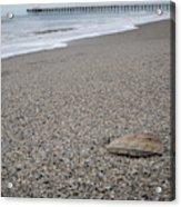 Pier Seashell Acrylic Print
