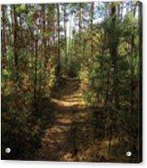 Pijnven Path Acrylic Print
