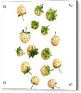Pineberries Hybrid  Acrylic Print