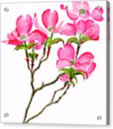 Pink Dogwood Vertical Design Acrylic Print