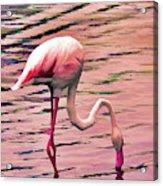 Pink Flamingo Two Acrylic Print