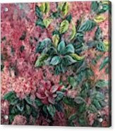 Pink Infusion Acrylic Print