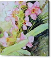 Pink Moth Orchids II Acrylic Print