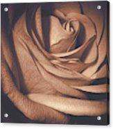 Pink Rose Petals 0219 Acrylic Print